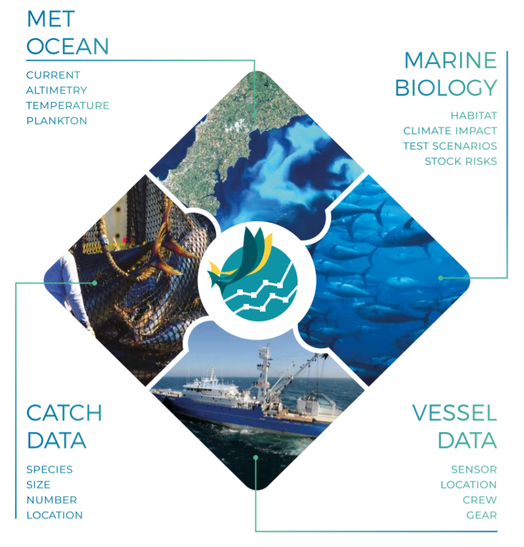 Dolfin Infograph